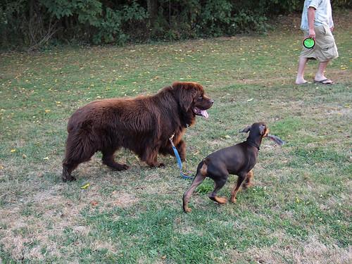 Max Lille Hund 2