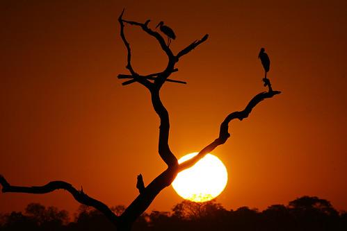 Sunset in Pantanal, Brazil