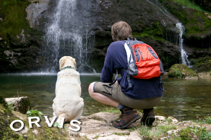 Orvis Cover Dog Contest - doggie