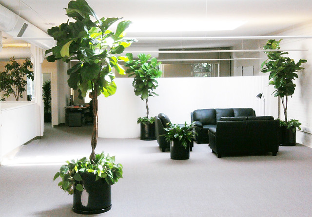 san francisco office plants service flickr photo sharing