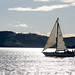 Small photo of Yacht, Otago Harbour