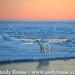 polar_bear_andyrouse_polar_bear_SV12752a_00070_00122 by wildmanrouse