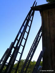 Orchard Ladders in Deerfield, MA