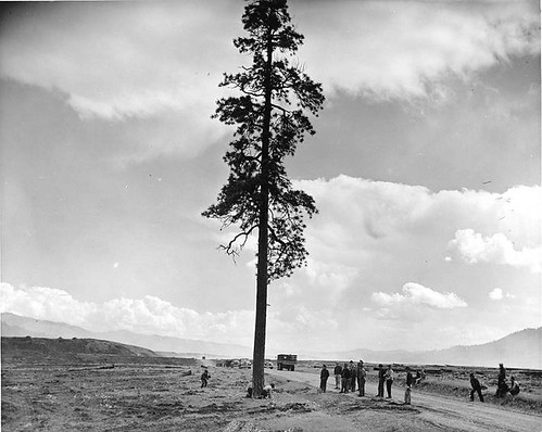 Last tree in Camp Gifford area, Washington