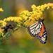CBS - Triad: Blue Ridge Parkway Field Trip 9/25/10
