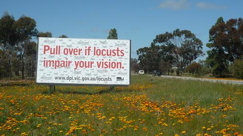 Locusts and wild flowers
