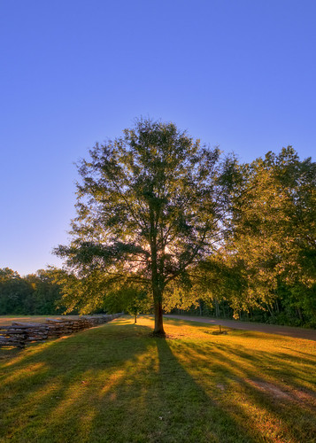 tree tennessee civilwar pittsburglanding battleofshiloh shilohtennessee sarahbellcottonfield shilohshiloh tntennesseecivilwarbattleofshiloh cwt11bf warbewteenthestates yahoo:yourpictures=earlymorning