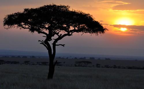 africa sunset sky tree kenya acacia newvision olareorokconservancy peregrino27newvision