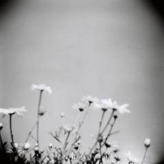 Dagens foto - 193: The flowers