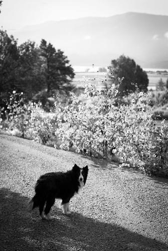 family vacation people usa dogs animals landscape colorado arboles durango zip geographiclocation