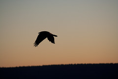 Flying Just Before Sunset