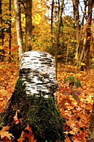 autumn trees fall leaves treestump