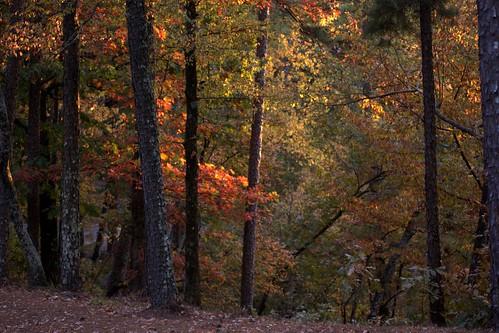 autumn trees red orange fall foliage arkansas hardwood hotsprings westmountain