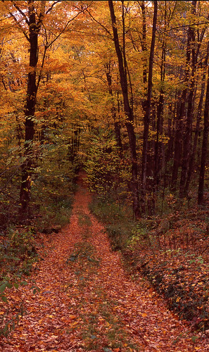 autumn autumnfoliage fall vermont fallfoliage foliage grafton graftonvt vtfoliage kidderhill kidderhillfoliage