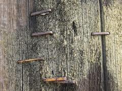 Metal Staples on Wood