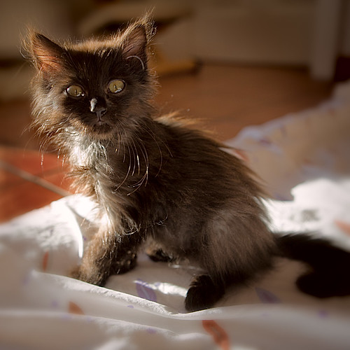 great tips to care for your pet feline feline fabulous
