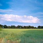 Texas Fields
