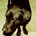 Small photo of Sancho