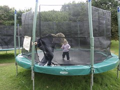 trampolining--equipment and supplies, net, trampoline, trampolining,