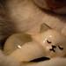 'Comforting' – Cute Cats by Kate Tettmar