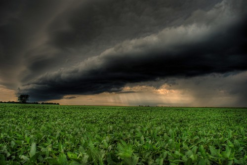 Storm Rolling in Over a Bean Field