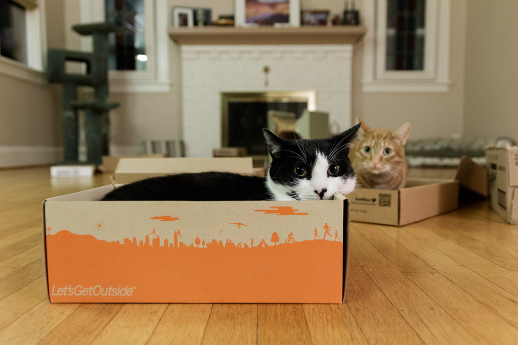 Our cats Sam and Boo in cardboard boxes