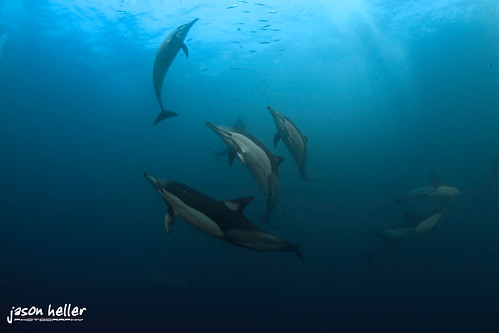 Dolphins in Formation
