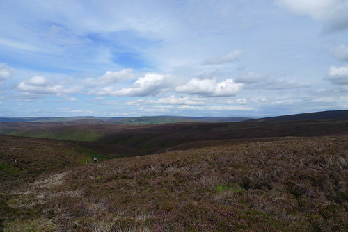 a long walk, across Bowland Forest and all the way to Ingleborough; if your eyesight's good enough
