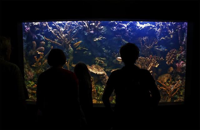 Underwater national aquarium washington d c by for Aquarium washington dc