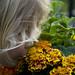 Child and flowers by Richard John Linnett