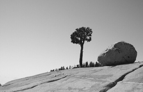 Yosemite Tree and Erratic Boulder