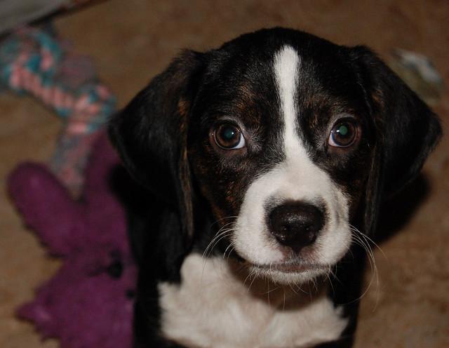 Hope Rescue Kentucky Won T Give Dog Back