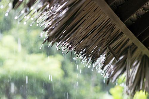 Rain in Khao Sok