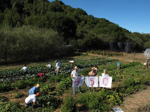 在Walker Creek牧場中志工協助農場除草、種植、堆肥等,並參與350的宣言活動(Photo by Caroline Kraus 照片來源:350.org)