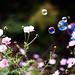 bubble bubble by fotografer_san