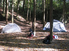 woodland, forest, wilderness, tent, camping,