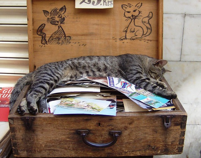 Istanbul - the bookstall cat