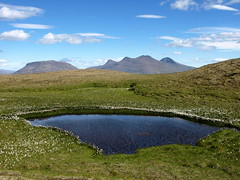 Cotton tarn