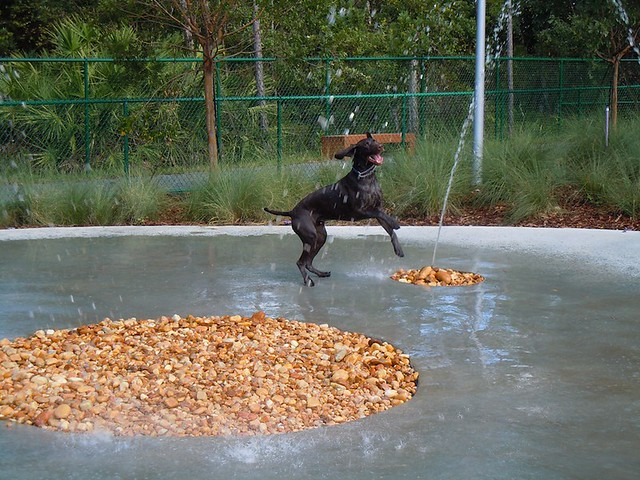 outdoor dog park with water features flickr   photo sharing