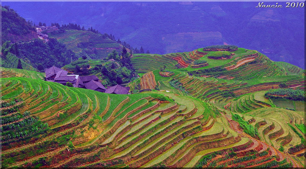 Terraced Rice Fields -- Ping'an, China
