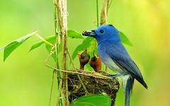 nightingale(0.0), branch(0.0), green jay(0.0), animal(1.0), yellow(1.0), nature(1.0), green(1.0), fauna(1.0), indigo bunting(1.0), bluebird(1.0), beak(1.0), bird(1.0), wildlife(1.0),