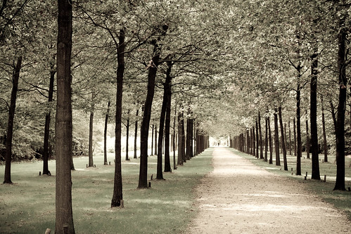 a single soul at the end of the avenue of life, crying for mankind.