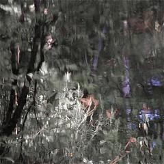 Daylilies in a dark world...!!!