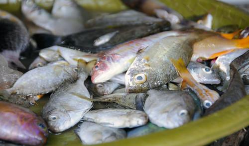 Pourquoi manger trop de poisson n 39 est pas bon pour la for Manger pour poisson