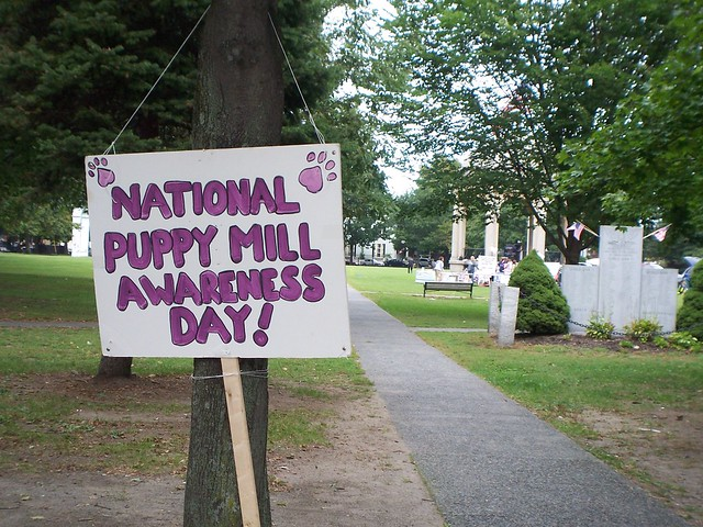 national puppy mills awareness day!