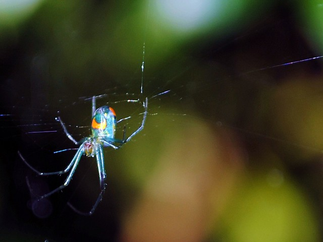beautiful colorful spiders