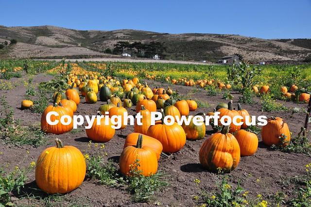 California Pumpkins