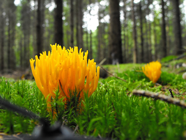 some yellow fungus | Flickr - Photo Sharing!