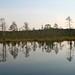 Small photo of Lahemaa peat bog