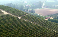 agriculture, farm, field, soil, bird's-eye view, valley, plain, hill, hill station, terrace, crop, landscape, rural area, vineyard, plantation,